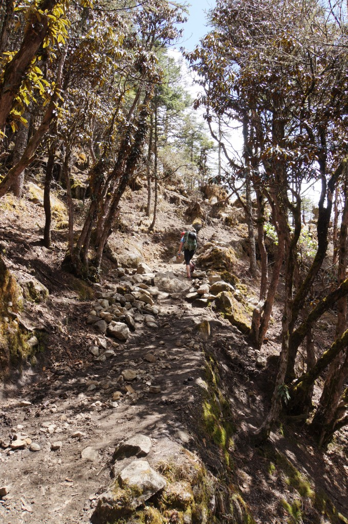 Spanish moss and rhododendrons. The terrain changes here by the hour, as we climb higher and higher.