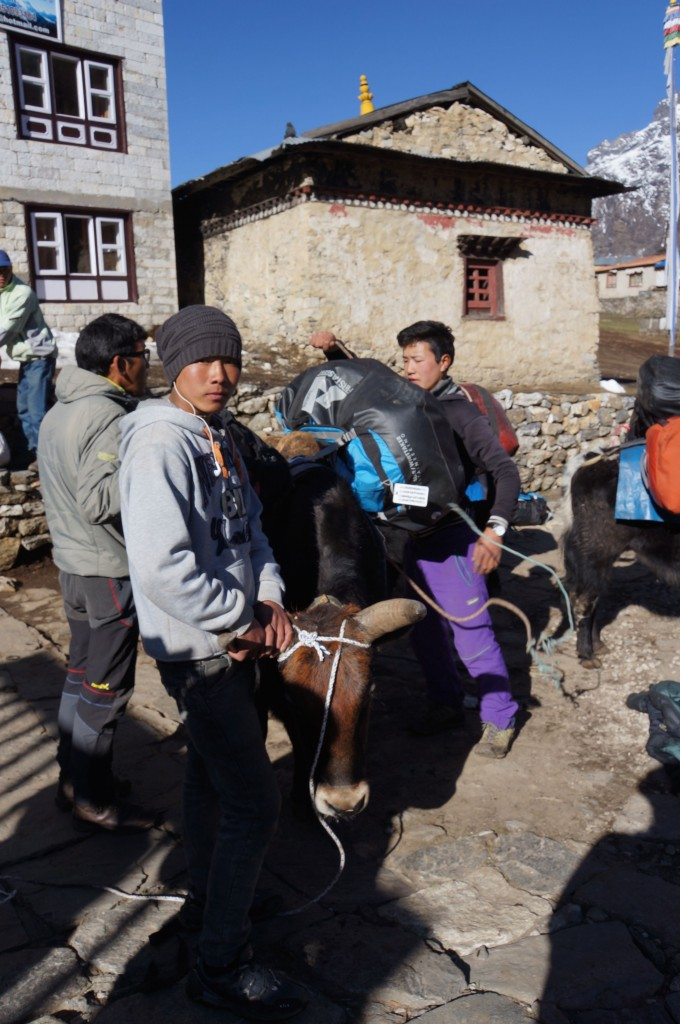 My duffel being loaded onto a yak. I think he is not happy about it....