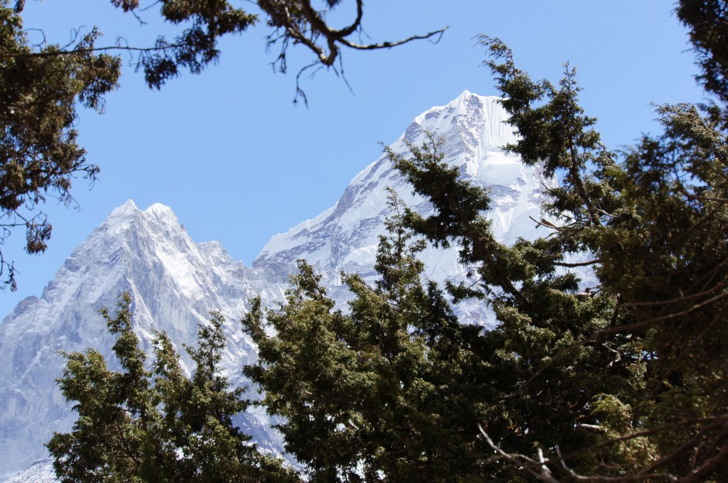 Pangboche is a lovely village with plenty of evergreen trees.