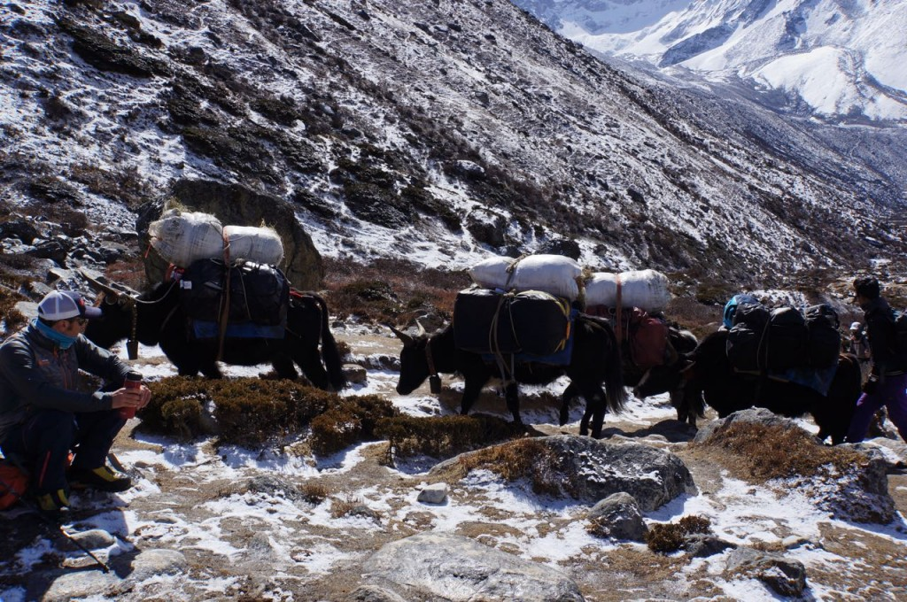 Yak train leaving Pheriche.